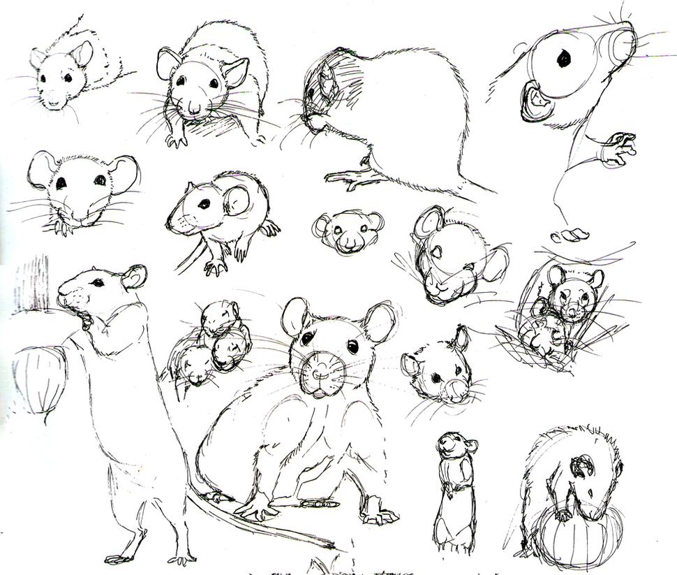 Line Drawing Rat : Rat practice by never mor on deviantart