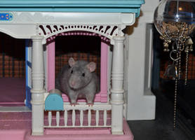 Cess in a House by nEVEr-mor