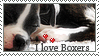 Boxer Club Stamp-thinger by Olivedrab