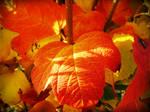 Autumn Wildfire by evelynrosalia