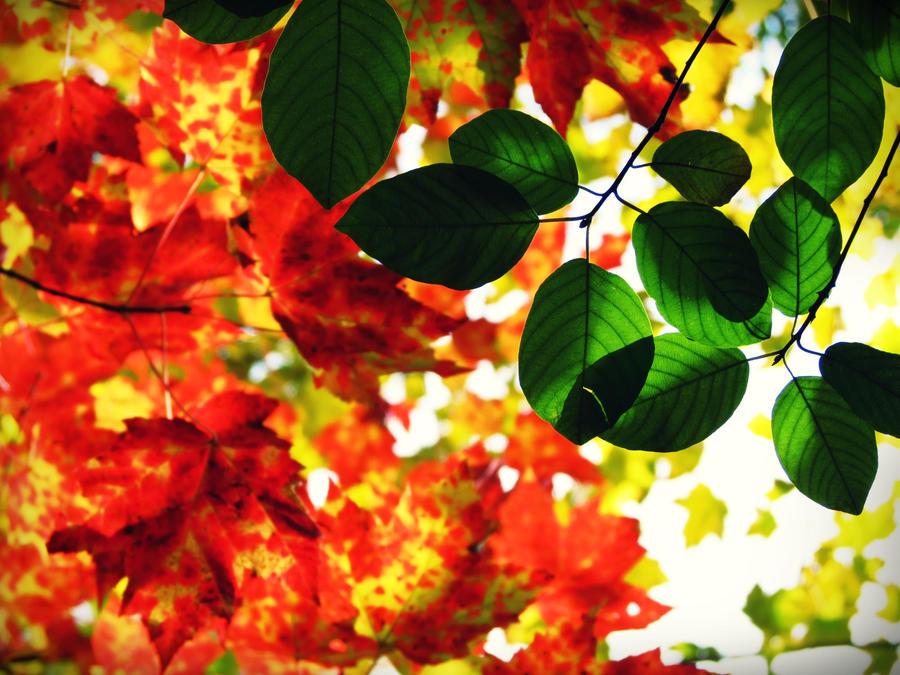 Autumn by evelynrosalia