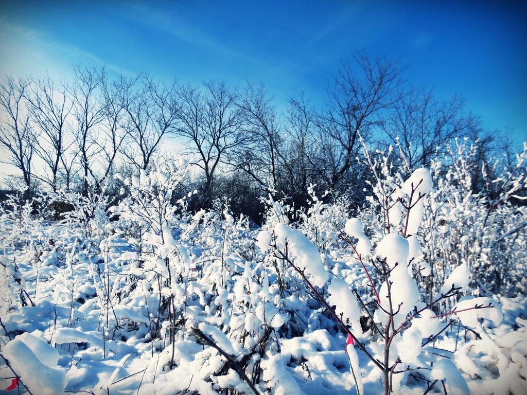 Winter by evelynrosalia