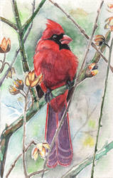 The Cardinal by bookstoresue