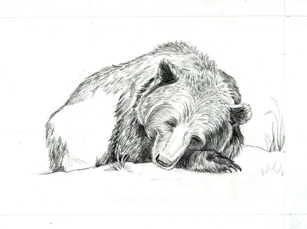 sleeping bear WIP by bookstoresue