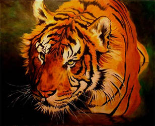 tiger by Bartsartny