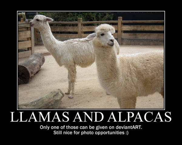Llama and Alpaca Motivational by BrendanR85