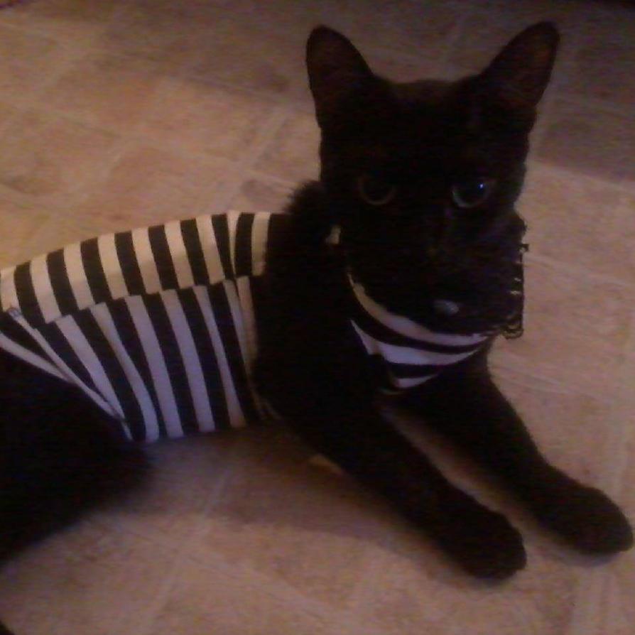 Meet  my cat Spooky by RayyRayy101