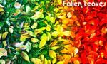 Rainbow Leaves by xPicturez