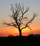 Sunset Tree 2 by Naturesview