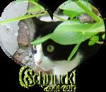 Rest in peace Schnucki by Kiriko-Windgeist