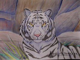 White Tiger by Kiriko-Windgeist