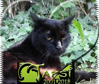Rest in peace Tapsi by Kiriko-Windgeist