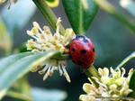 Morning Ladybug