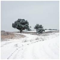 Impression of winter by Sesjusz
