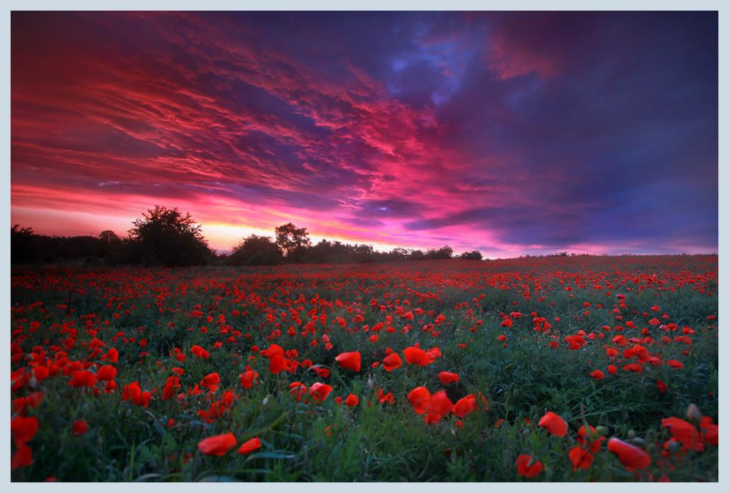 [صورة مرفقة: Red_Sky_by_Sesjusz.jpg]