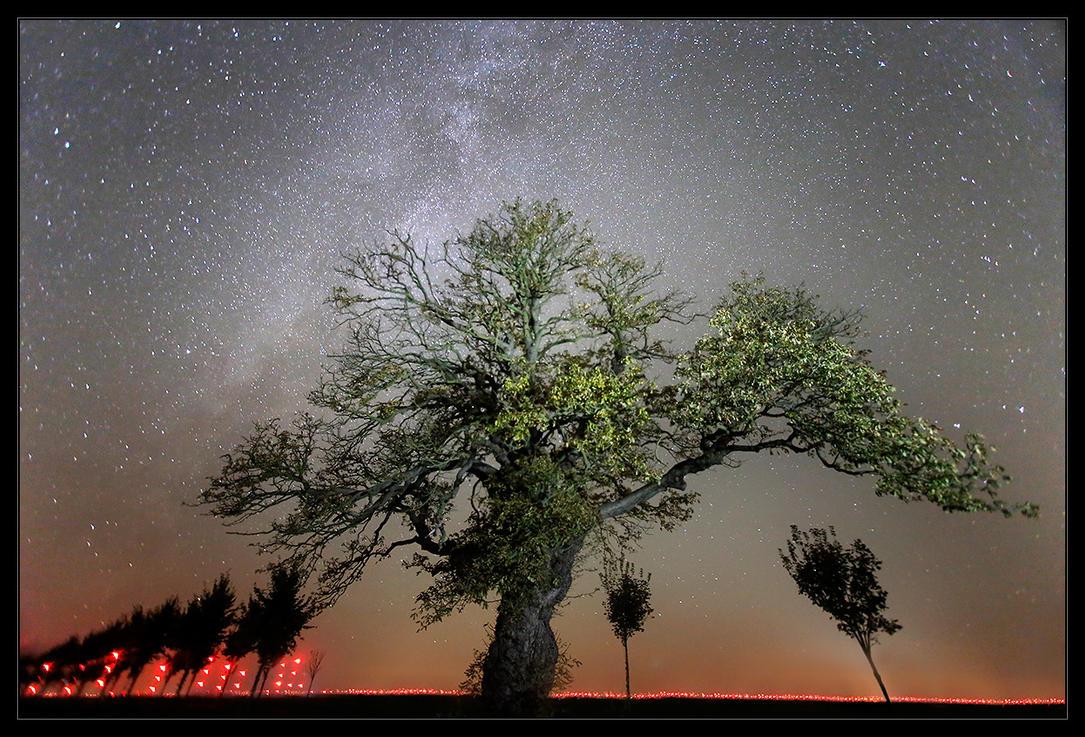 Tree of Life by Sesjusz
