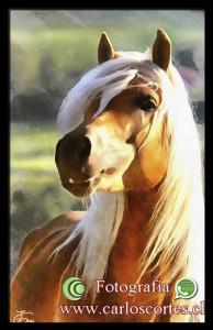 CrearteCarlosCortes's Profile Picture