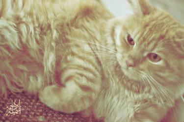 honey cat by bnateen