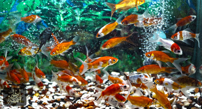 fishes kingdom by bnateen