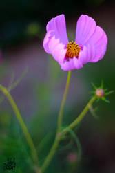purple sense by bnateen