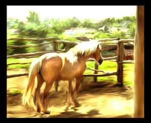 watercolor pony