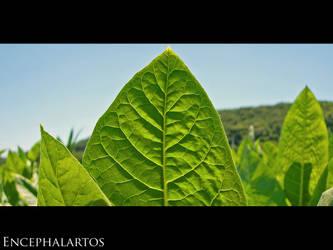 In Vein by Encephalartos