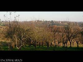 Belmont by Encephalartos