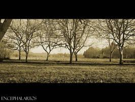 The Quiet Herd by Encephalartos