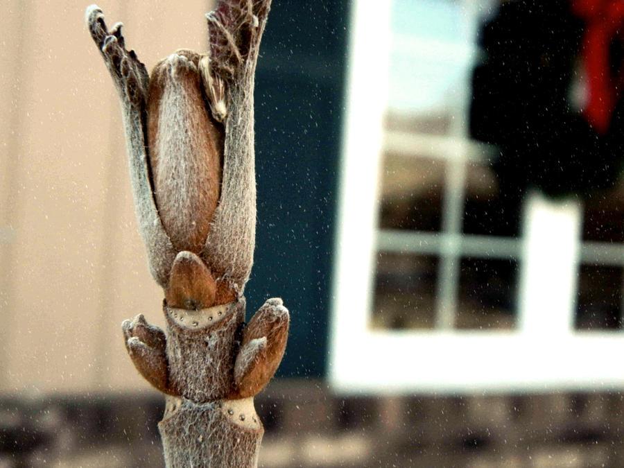 Antlers by RainbowGuitars