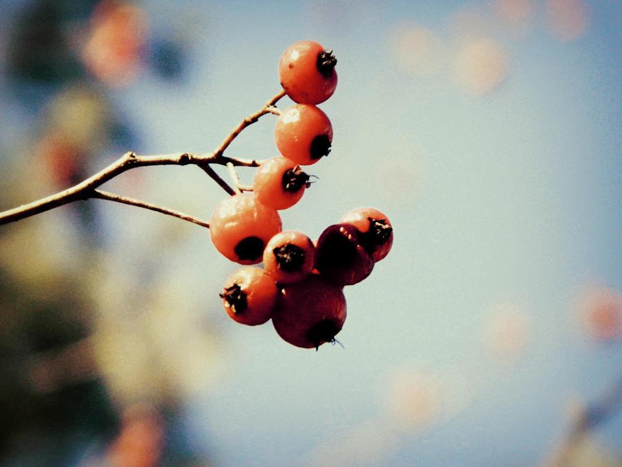 Berries by RainbowGuitars