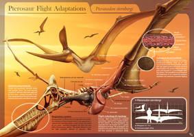 Pterosaur Flight Infography by HSilustration