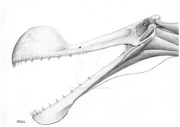 Tropeognathus skull study I