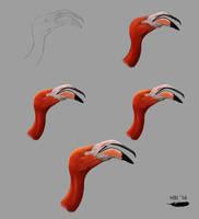 Flamingo study - process