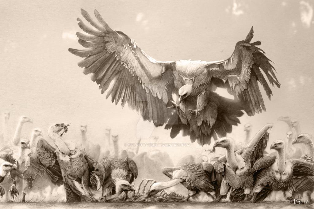 Griffon vultures by HSilustration