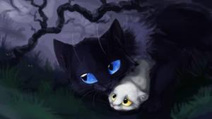 Cats by Bedupolker