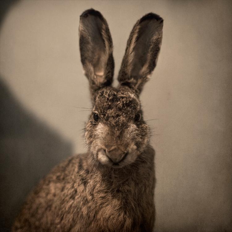 jack rabbit by NewChord
