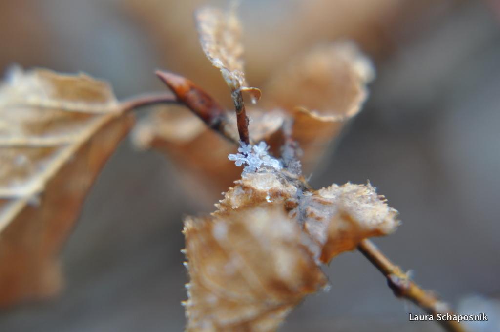 Snowflake II by lauchapos
