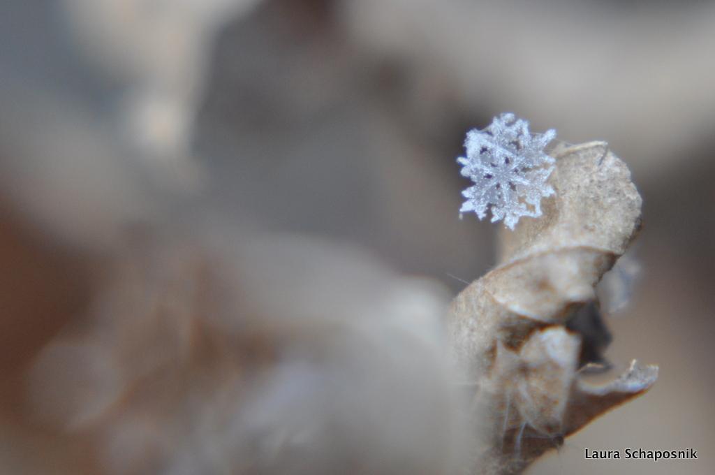 Snowflake I by lauchapos