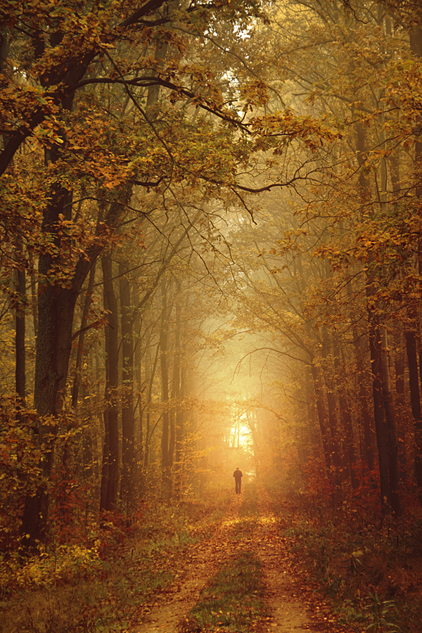forest... by iwetka