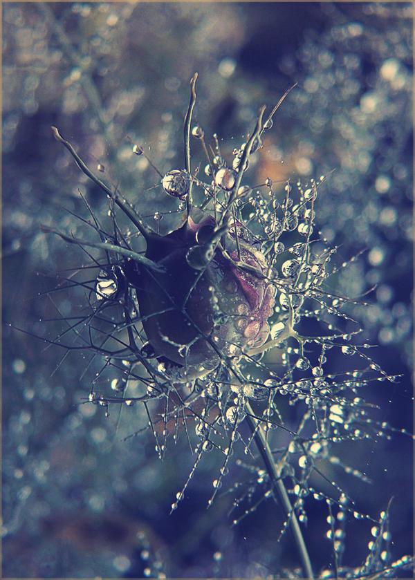 drops... by iwetka
