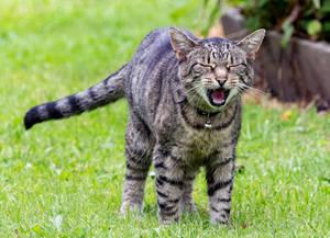 Meow !!!