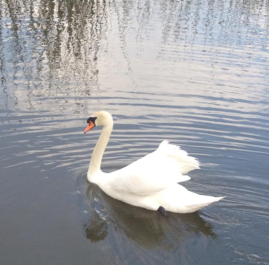 Swan Boat by origamizebra