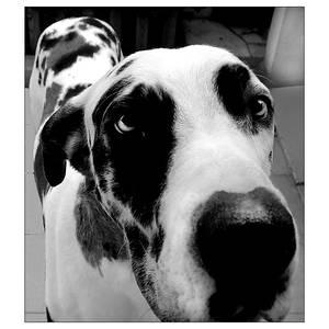 Zurk the dog 08