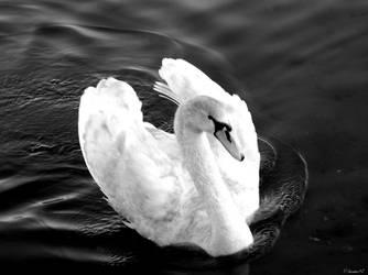 Swan of Tuonela II by Thornserpent