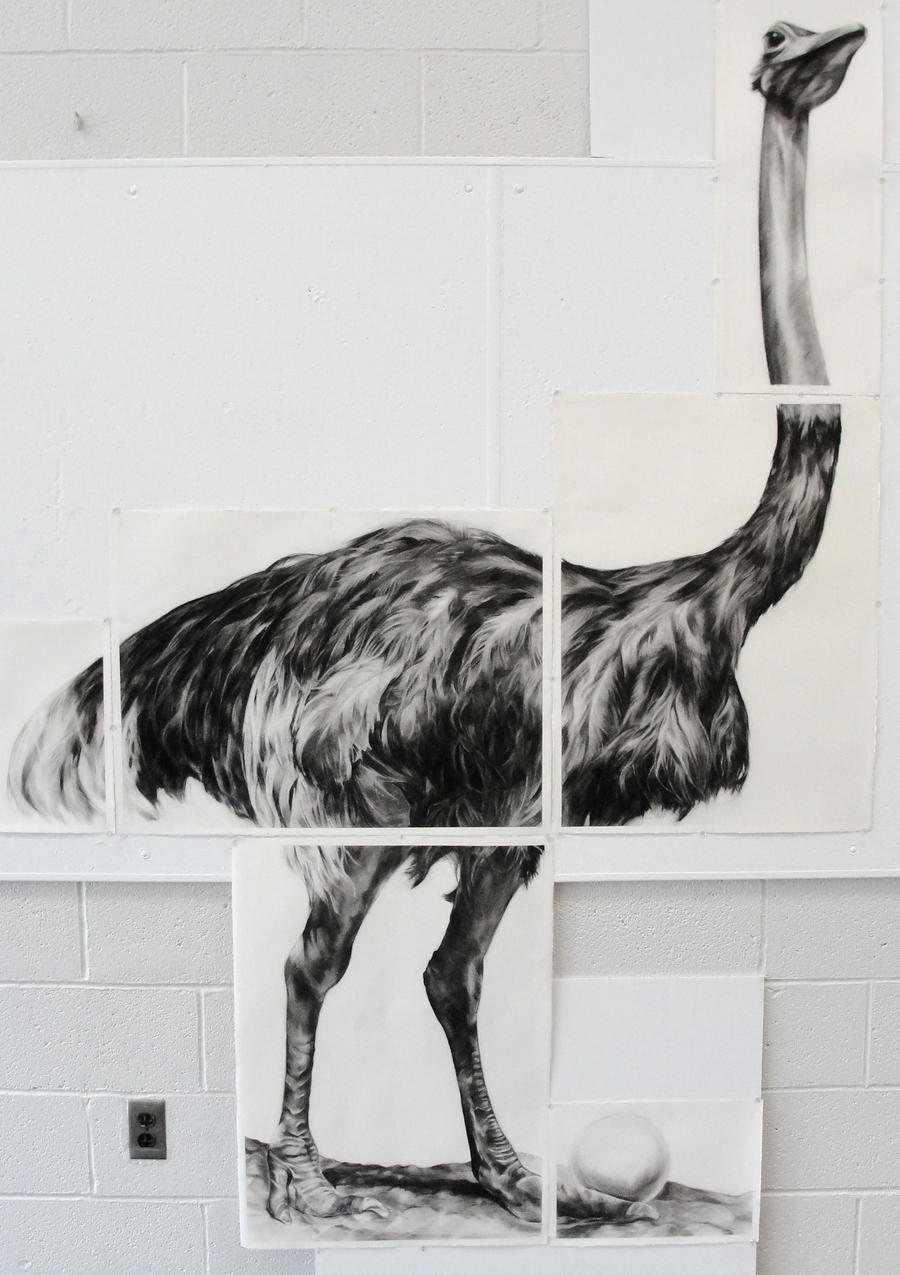 Showing picture: Ostrich Pen And Ink Drawing