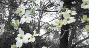 Branches of Spring