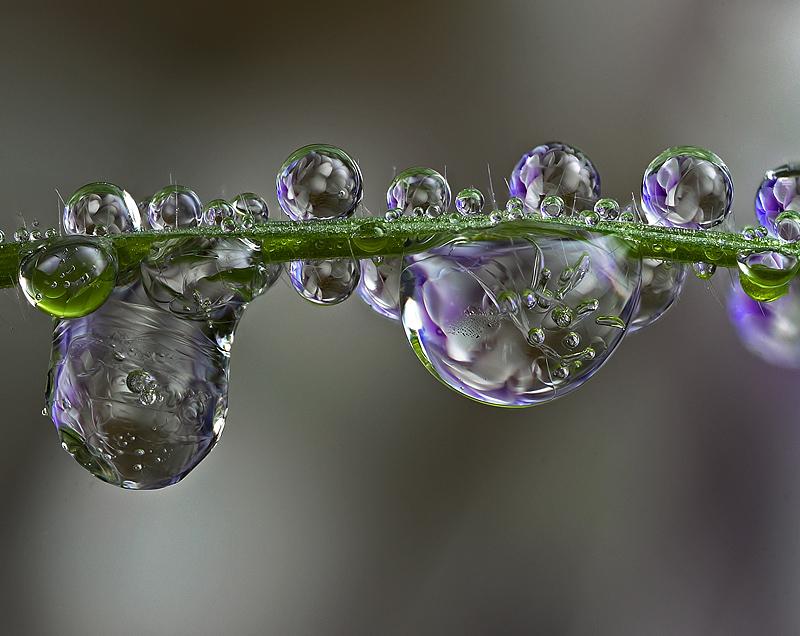 Frozen Dew Drops by Alliec
