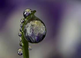 Frozen dew by Alliec