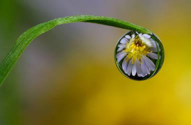 Dew Drop Refraction 14 by Alliec