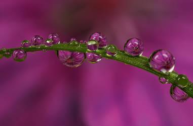 Dew Drop Refraction 19 by Alliec